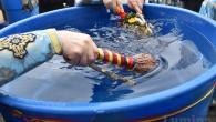 """Cuvantul """"agheasma""""(gr. aghios -sfintire) inseamna sfintire si denumeste atat apa sfintita, cat si slujba pentru sfintirea ei. Agheasma Mare se sfinteste doar de doua ori in cursul unui an: […]"""