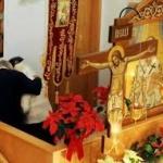 Postul Mare si Canonului Sf.Andrei Criteanul (video)